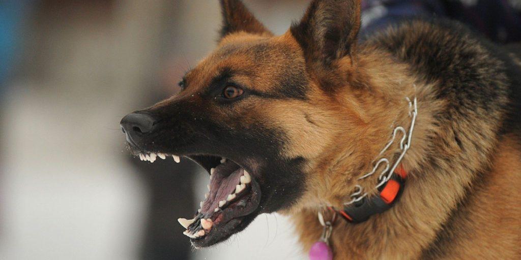 Dog Bite Attorneys - animal attack law